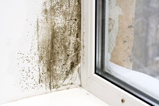 Window-Mold